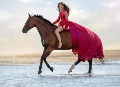 Quarter Horse bareback
