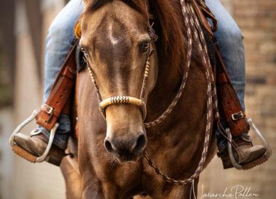 western quarter horse