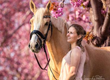 Kirschblüte Palomino