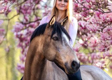 Magnolie Pferd