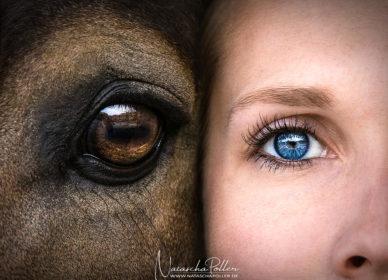 Horse Human Eyes