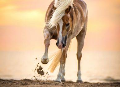 Horse Beach wild