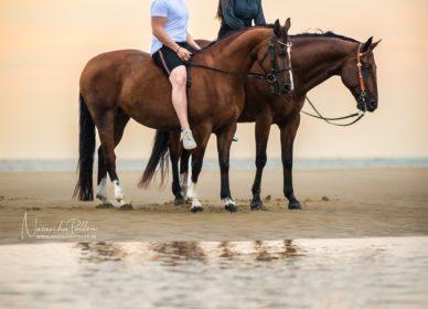 Couple Horses Beach