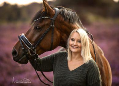 Pferd Porträt Heide