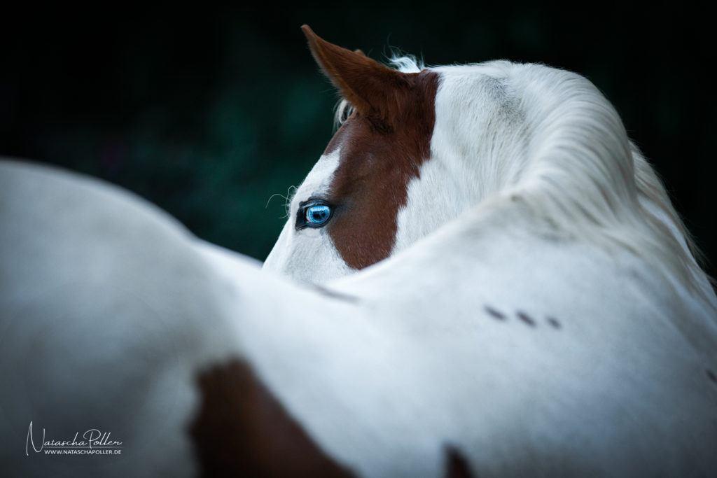 Paint Horse Detail