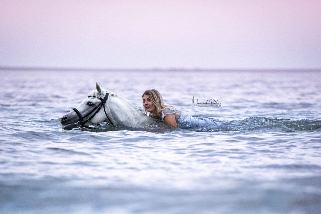 arabian horse swimming