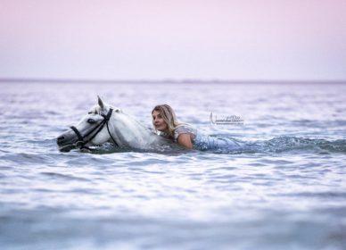arabian horse swimming