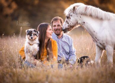 horse dog family