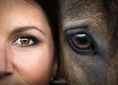 horse human eye