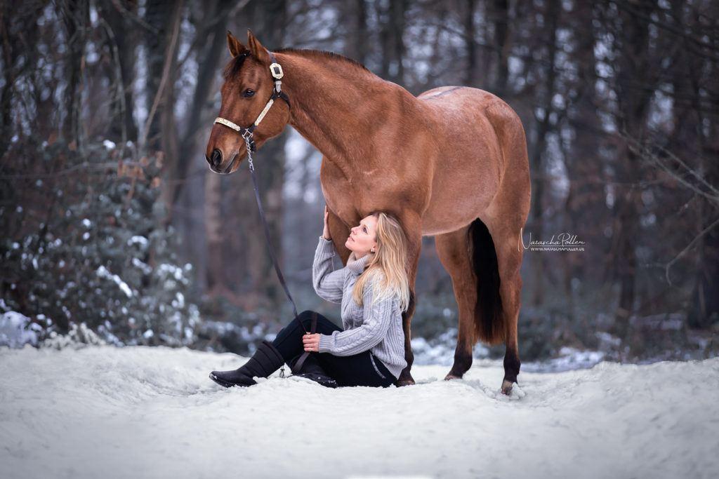 quarter horse snow