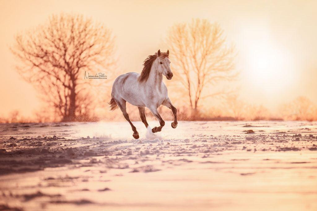 pre snow sunset