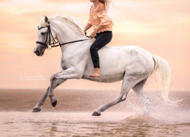 arabian horse beach